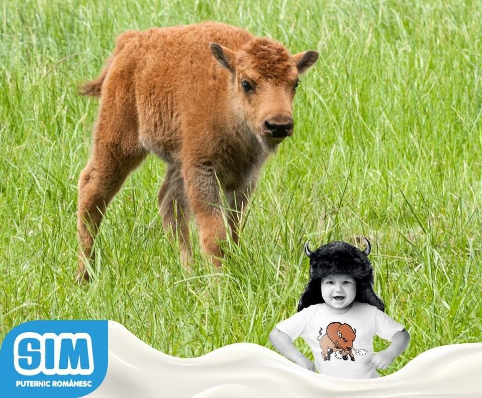 Despre o vacă